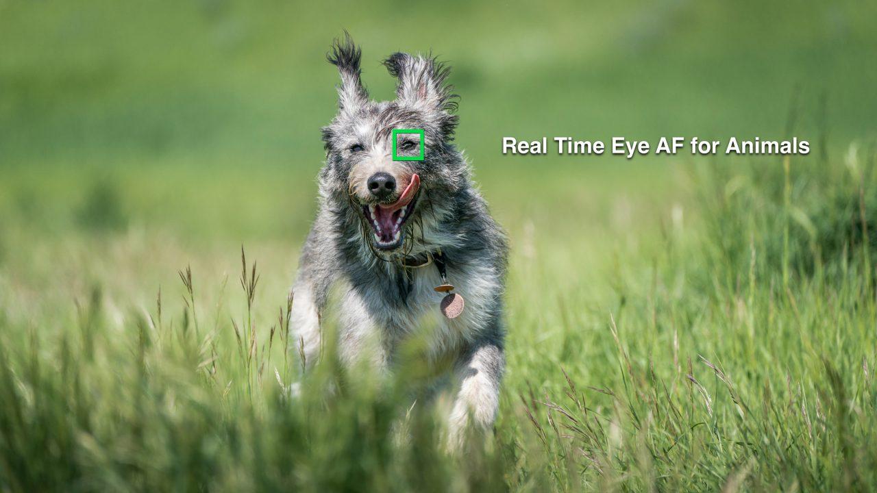 Animal Eye AF